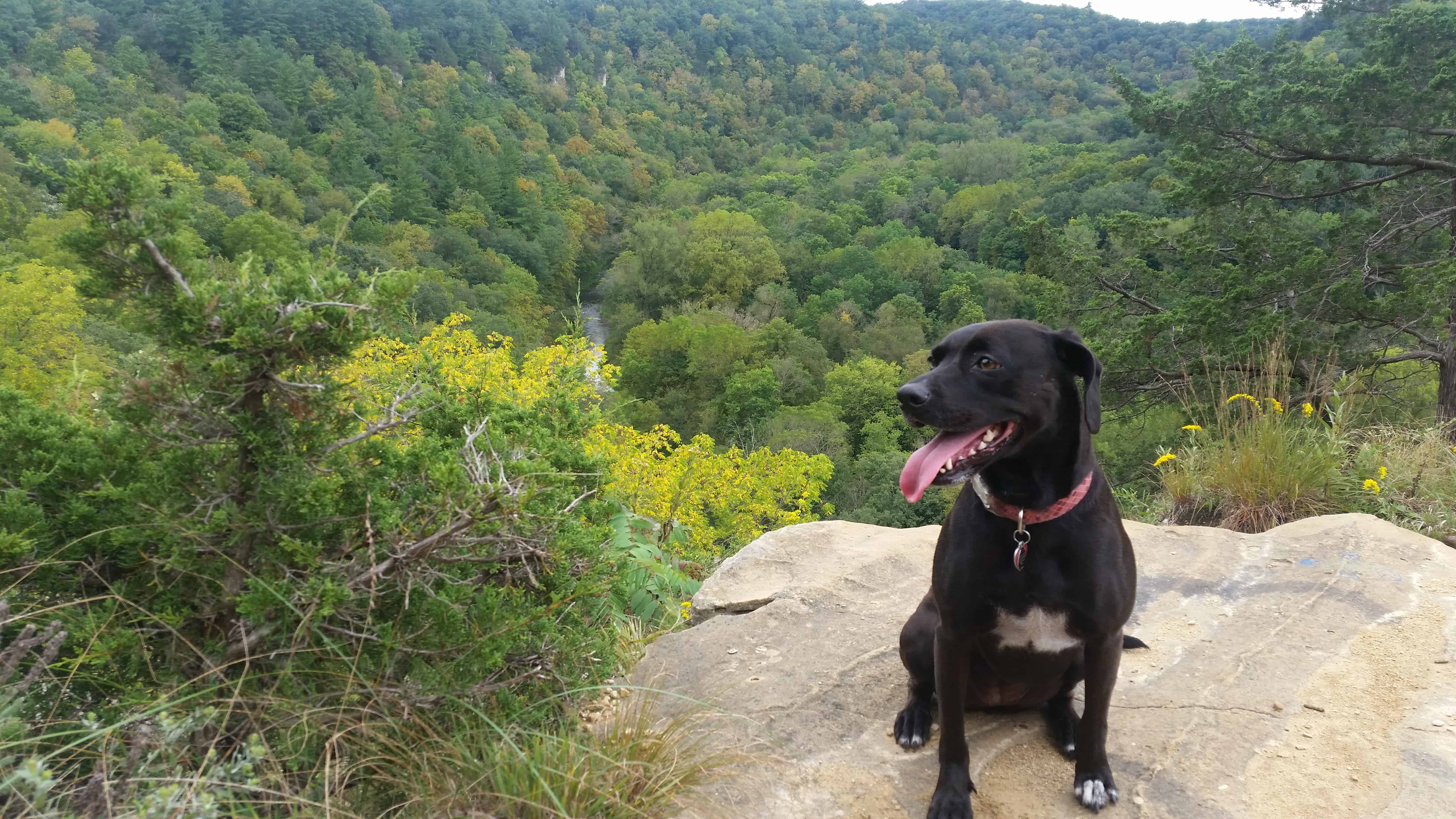 5 Great Dog-Friendly State Parks in Southeastern Minnesota